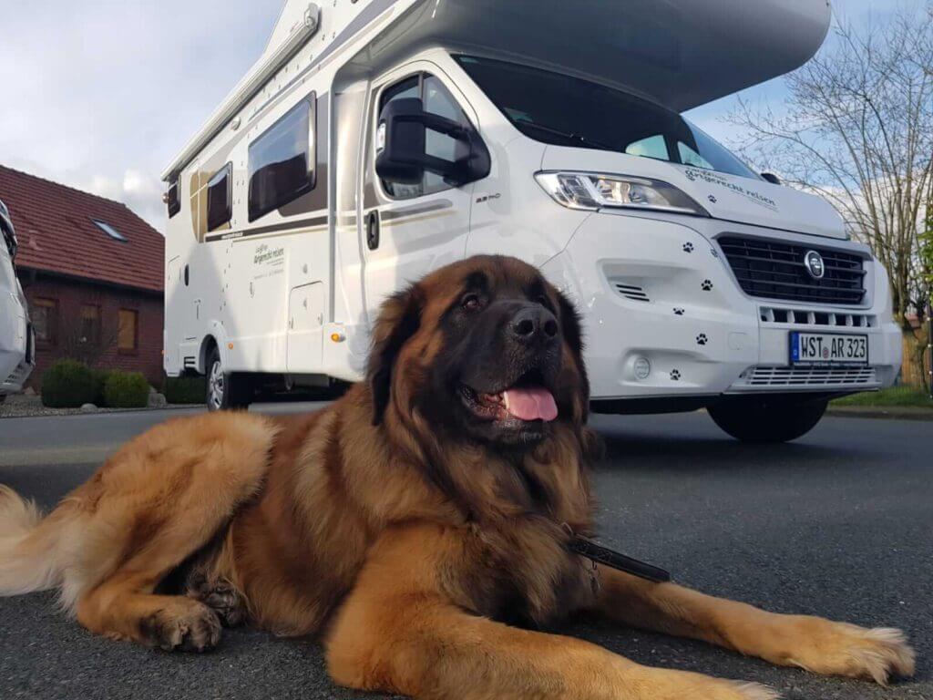 Erfahre mehr über unsere Wohnmobile Artgerecht Reisen, die Wohnmobilvermietung für Hund und Mensch